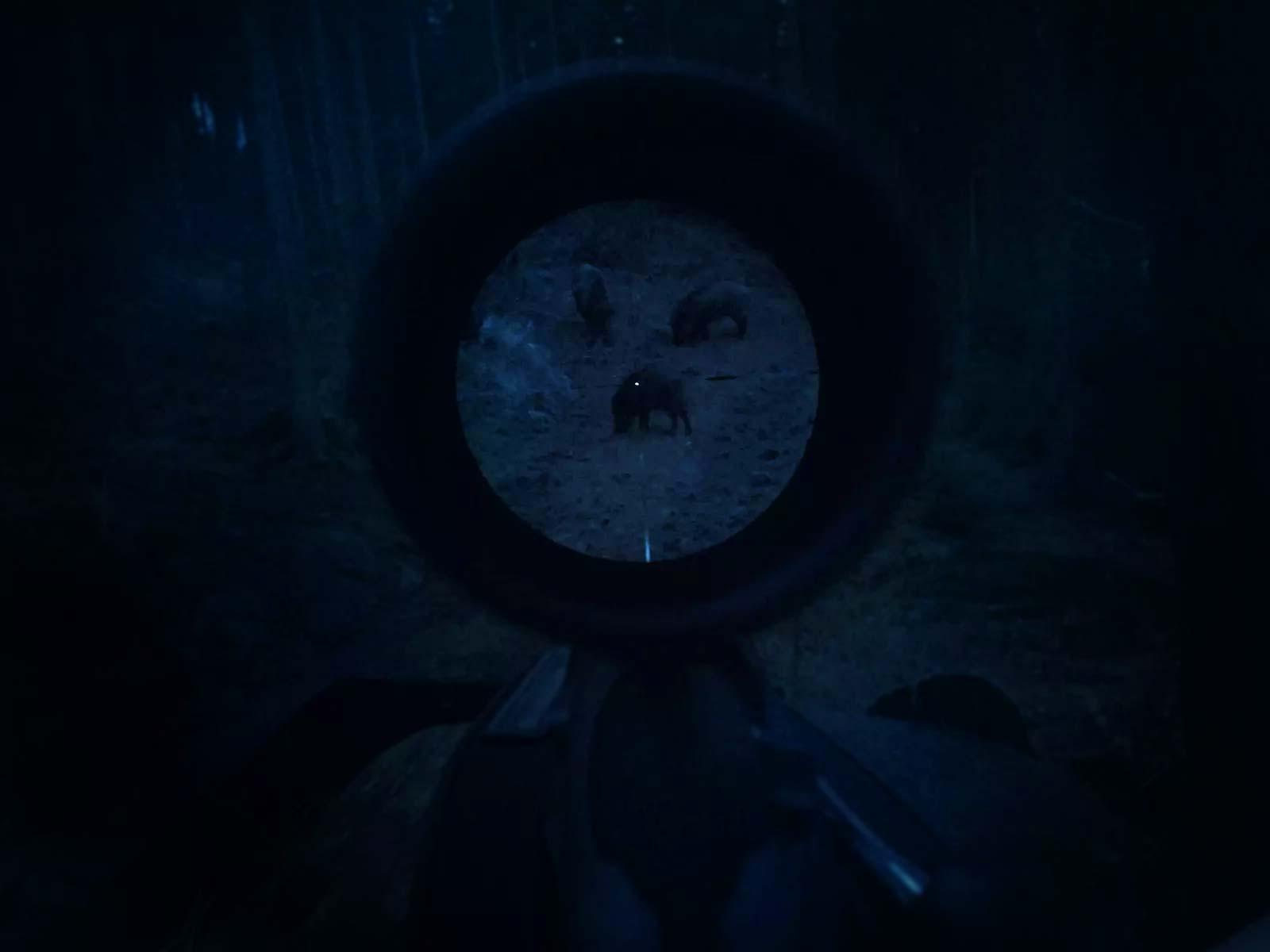 User test steiner nighthunter fernglas zielfernrohr