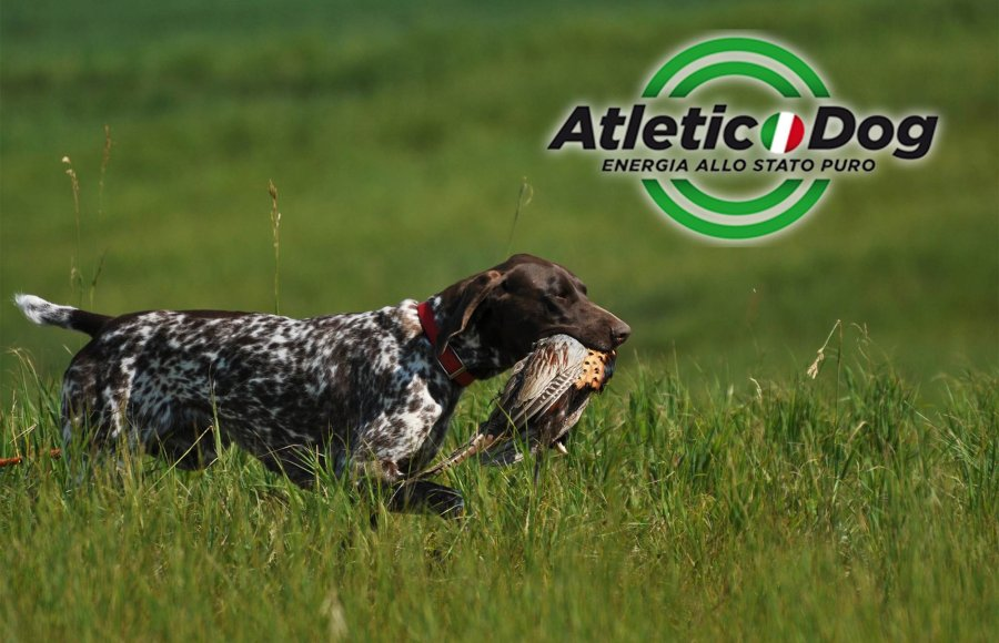 Atletic Dog
