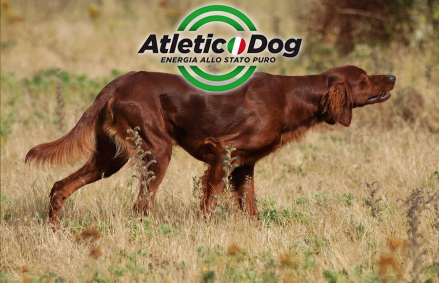 Atletic Dog food for hunting dog