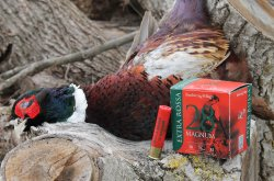 Baschieri & Pellagri Extra Rossa cartridges with pheasant
