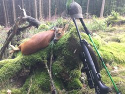A bagged and propped-up button deer