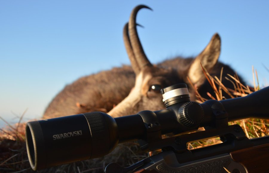 Swarovski Z5 3.5-18x44P with a chamois doe