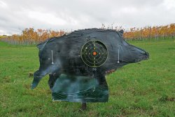 Young wild boar target