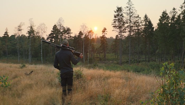 culture: Dream hunt: affordable hunting in Sweden