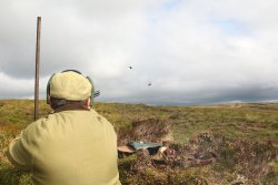Shooting driven grouse from a grouse butt
