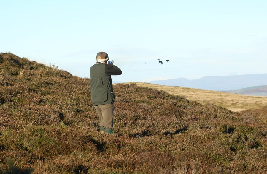 Walked up grouse shooting in Scotland on upland