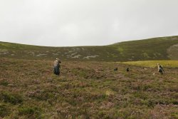 Shooting at a mature red grouse