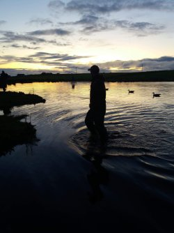 Goose decoys in water