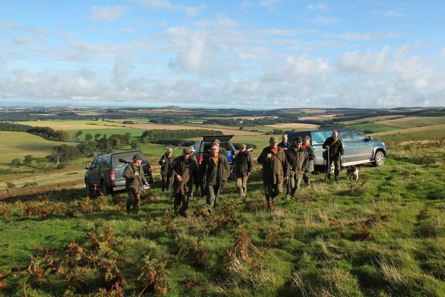 Hunting rabbit: start of the day on the Lammermuir hills
