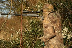 Calling muntjac: hunter camouflaged