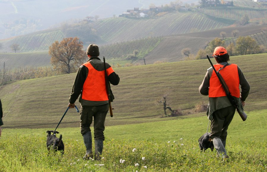 Hunters get ready to start a driven wild boar hunt