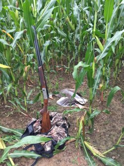 The Krieghoff K-80 in a cornfield