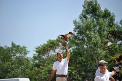Falconiere al Game Fair