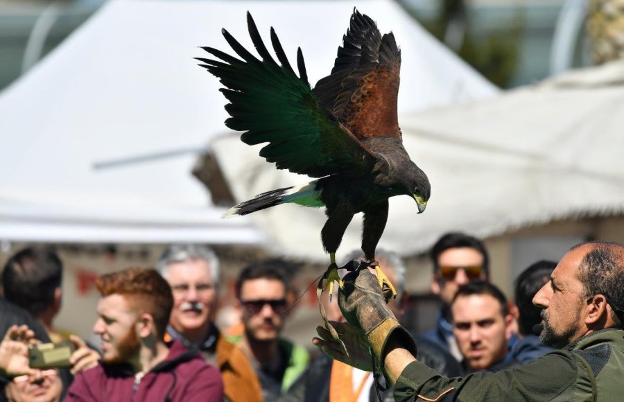 Falconeria Hunting Show Sud