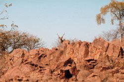 Kudu sulle rocce in Namibia