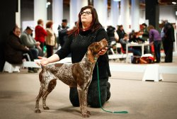 Cane a HIT Dog Show